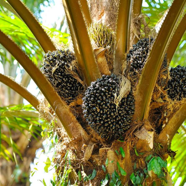 Palm-Oil-Products